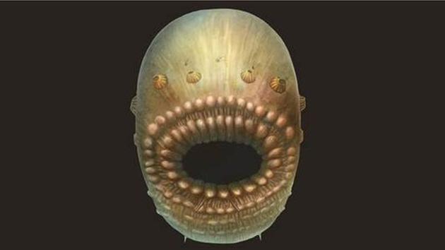 图为艺术家根据化石所绘的Saccorhytus概念图。真实的Saccorhytus体长或许不足一毫米。
