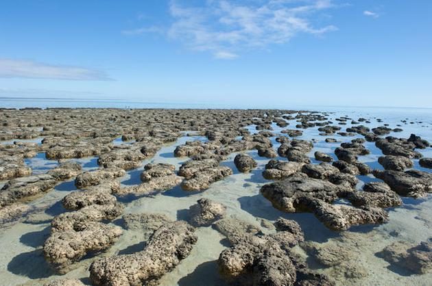 澳大利亚西部鲨鱼湾世界遗产地的叠层石。叠层石是由微生物,尤其是蓝菌黏结堆砌而成的,而蓝菌很可能是地球上最早的光合作用生物
