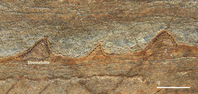 这些锥形结构发现于格陵兰岛一些有37亿年历史的岩石中,可能是地球最初生命的化石