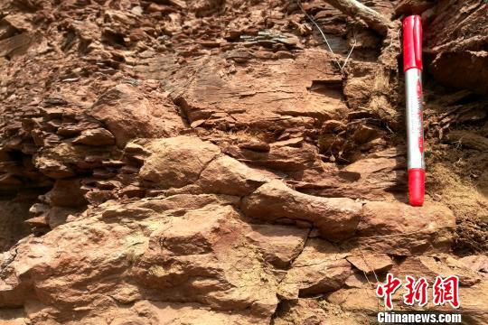 图为石川河剖面三叠纪早期的遗迹化石。 田力 摄