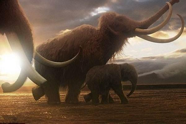 猛犸象也会患人类常见的骨骼疾病。