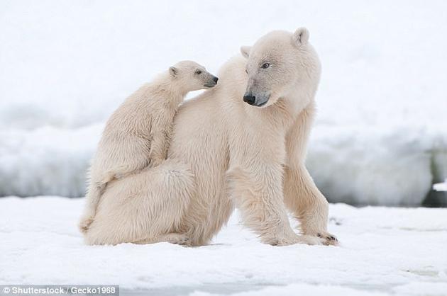 尽管有许多物种消失,但新的生命形式,如北极熊等,在接下来的更新世中也不断出现。