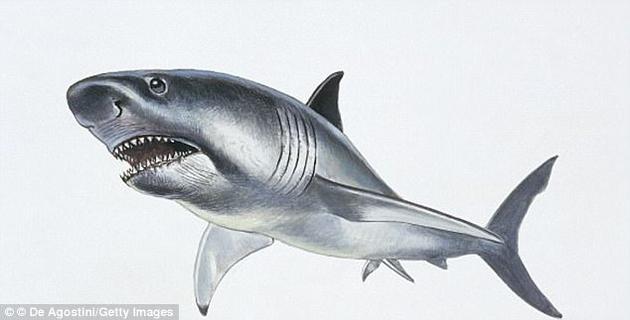 一些海牛和须鲸物种,以及巨大的巨牙鲨(Carcharocles megalodon),都在这次灭绝事件中消失了