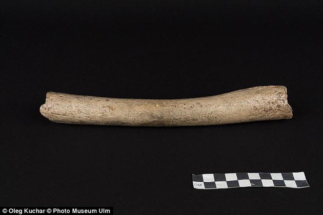 研究人员分析一根股骨化石线粒体DNA,发现它属于穴居人分支。
