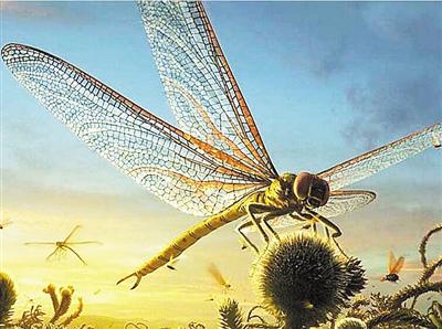 翅展700多毫米捕食幼年蜥蜴:蜻蜓老祖宗啥如此彪悍
