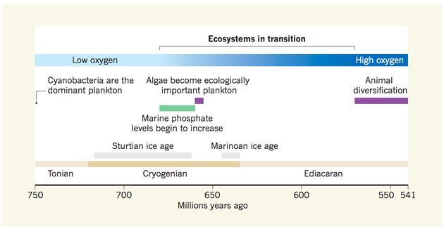 这张时间线示意图显示了地球的地质化学变化与藻类等真核生物的出现之间的联系