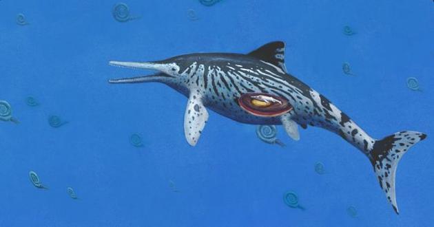 这种学名为Ichthyosaurus somersetensis的鱼龙游弋在2亿年前海洋中,当时正是恐龙称霸地球陆地的时期。