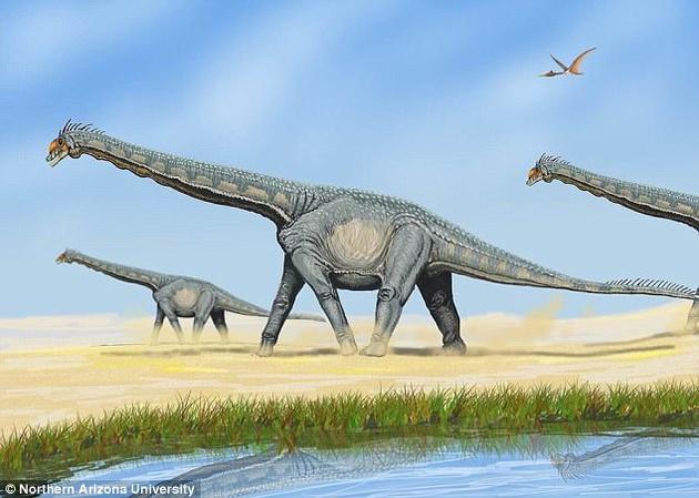 属于蜥脚类的阿拉摩龙属恐龙,生活在白垩纪的北美洲。