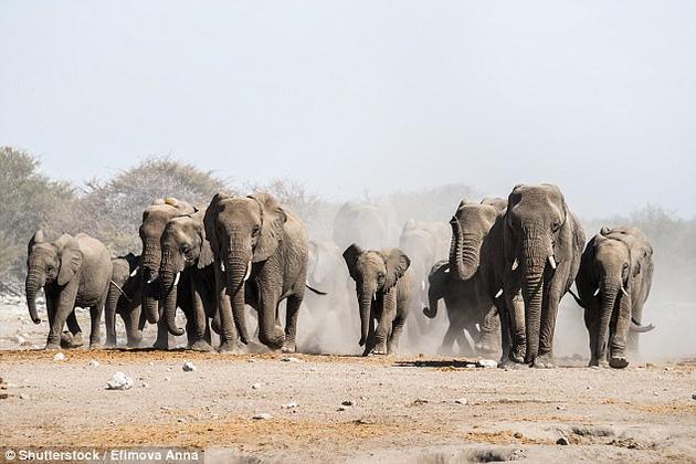 大型动物的重要性不仅体现在粪便的数量上,而且在于它们能长距离迁移,从而使营养物质有效混合。