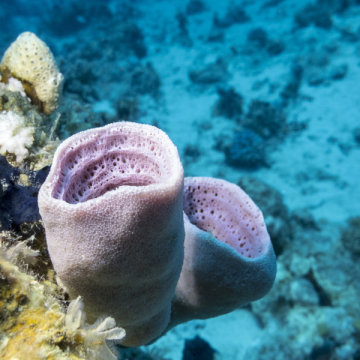 科学家通过数据分析发现,现代地球上最古老的动物是海绵,而非栉水母。