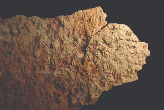 原旋趾蜥的化石足迹表明,约2.5亿年前的恐龙祖先(恐龙形类)生活在现在的西班牙东北部。波兰和巴西的其他化石点也发现了原旋趾蜥足迹。