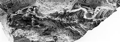 有鳞动物最古老祖先认定 填补爬行动物起源认知空白